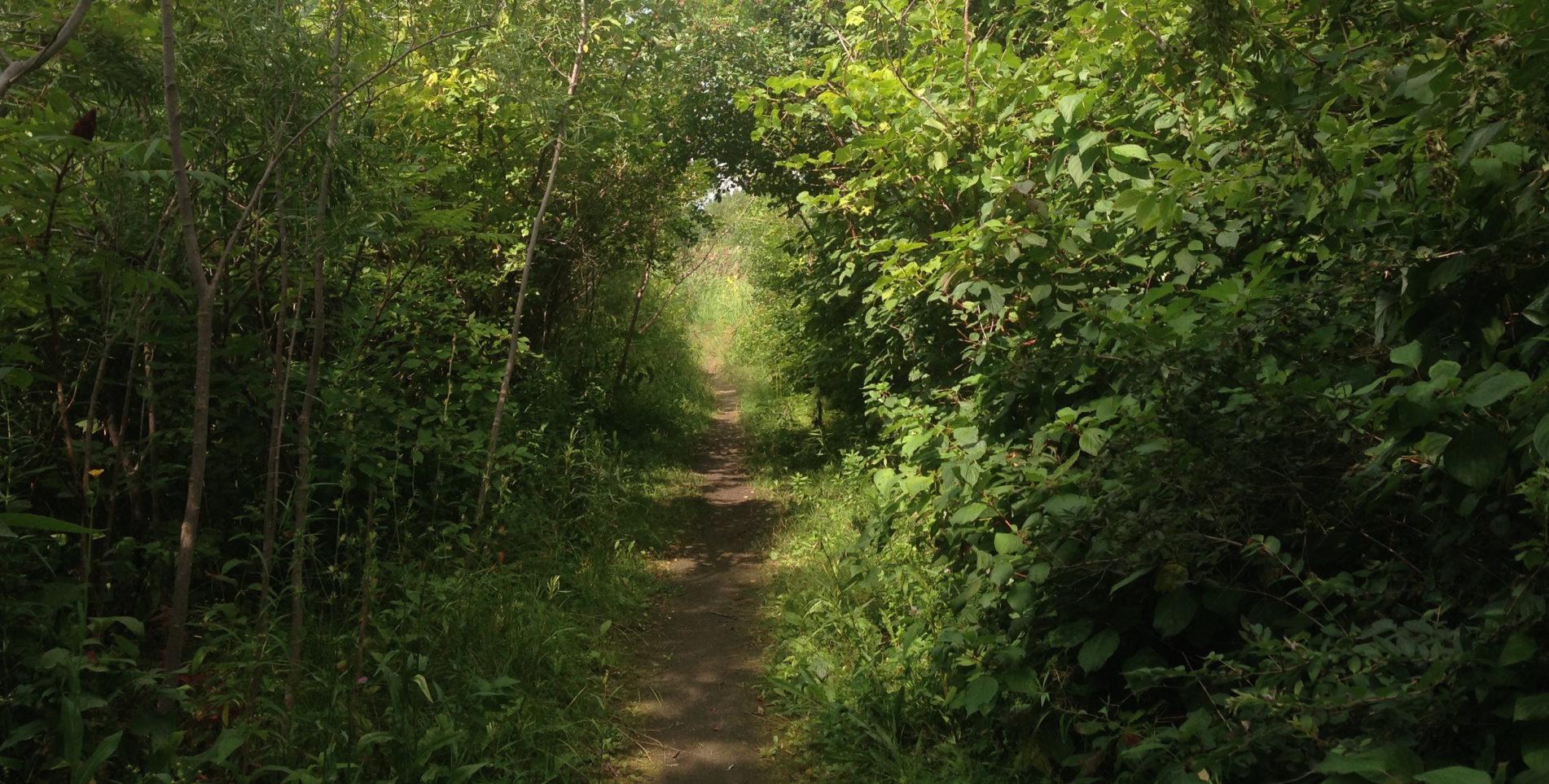 Chemin de nature verdoyante