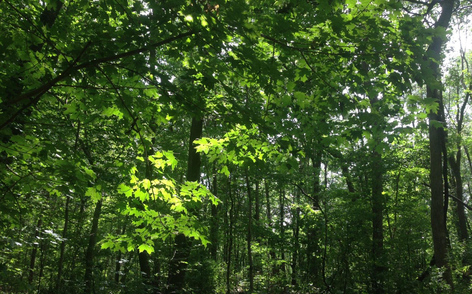 Nature, Arbre, Forêt verte