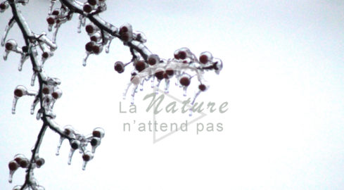 La nature n'attend pas