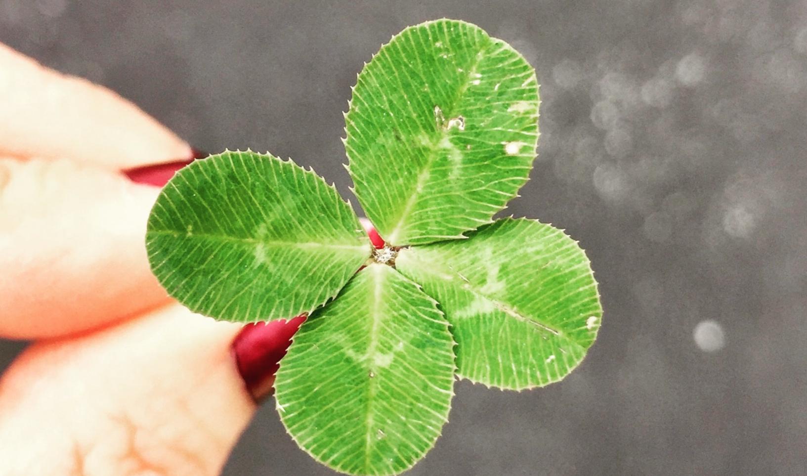 Trèfle à quatre feuilles vert