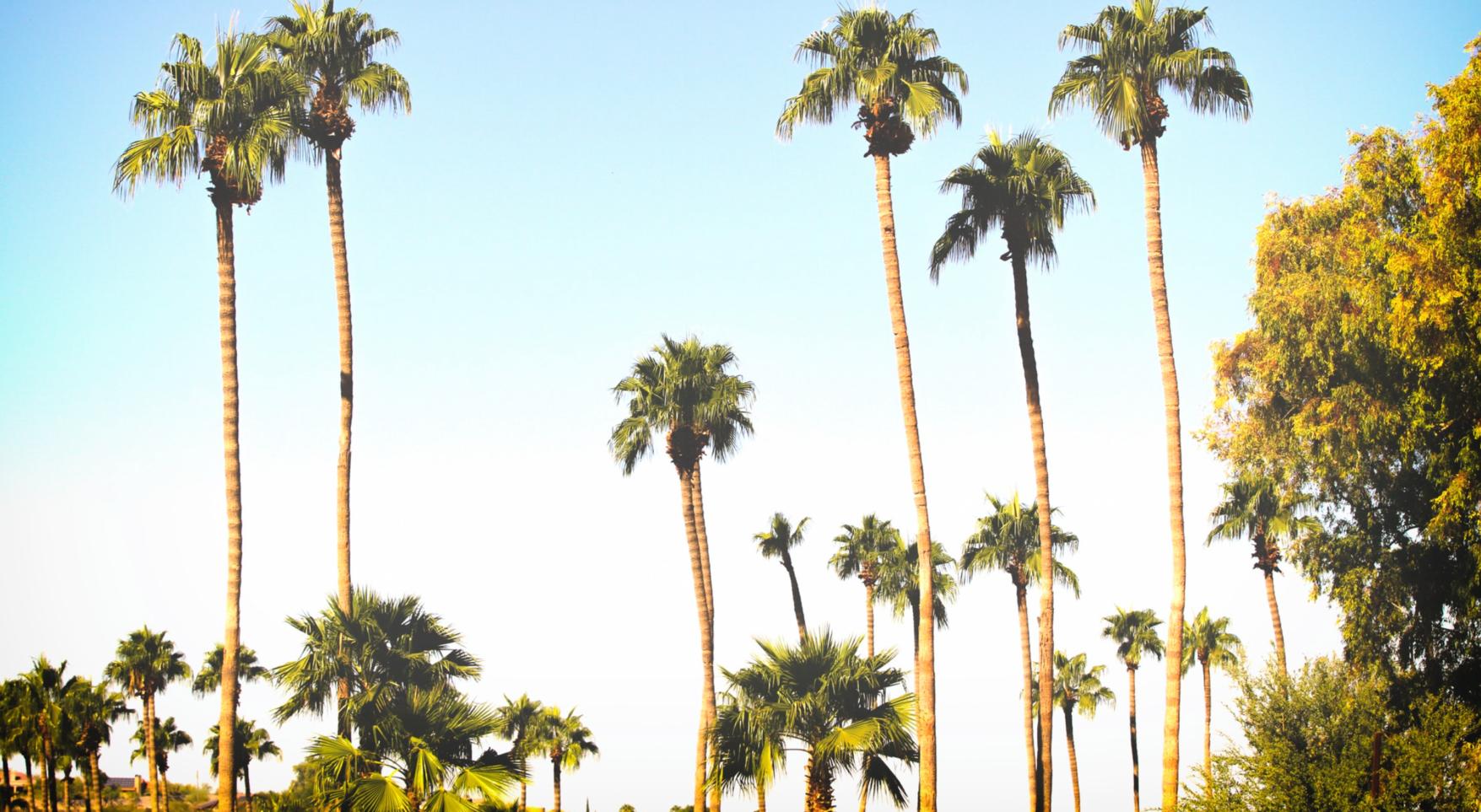 Palmiers et soleil sur fond bleu : c'est le printemps