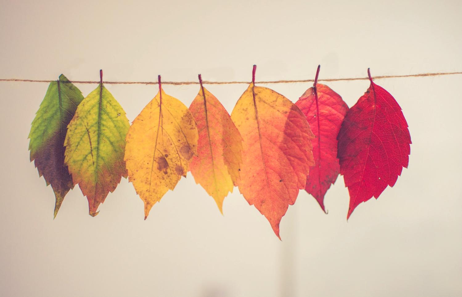 Sept feuilles colorées suspendues par dégradé de couleur du vert au rouge